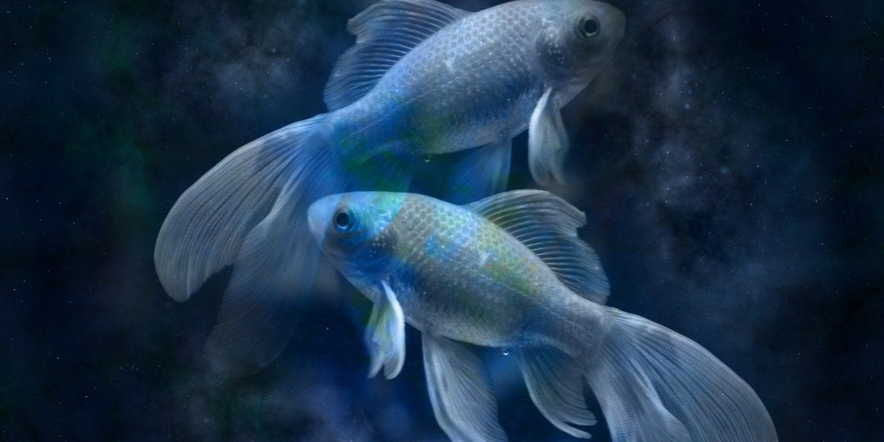 5 Things To Know About Dating A Pisces